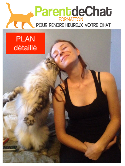 Plan détaillé de la Formation de Parent de Chat