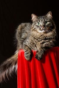 Un chat aux poils !