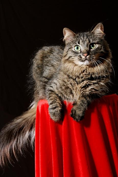 conseils pour les poils de chats sur laVieDesChats.com