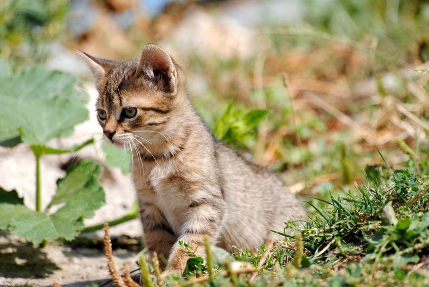 laVieDesChats.com vous offre le guide d'accueil d'un nouveau chat