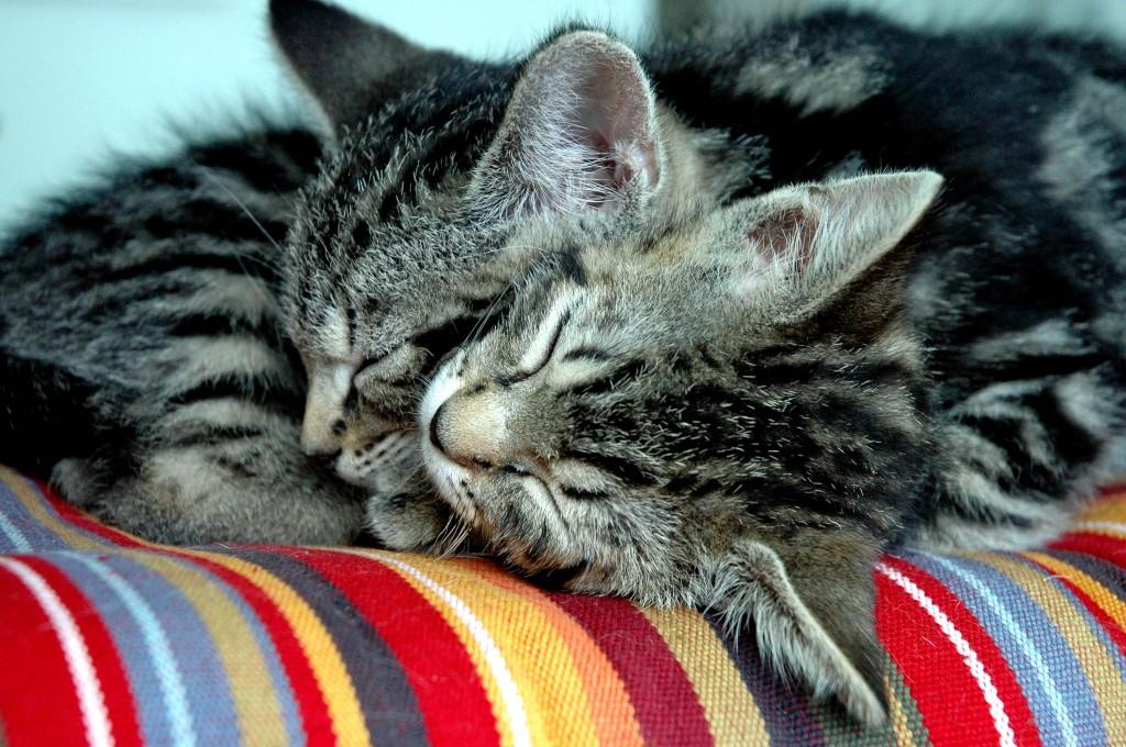 découvrez le secret du sommeil du chat sur laVieDesChats.com