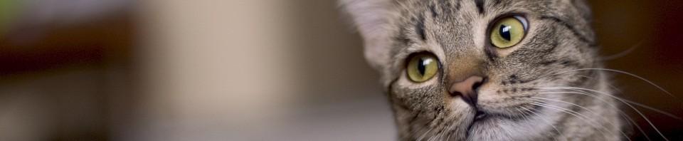 comportementaliste pour chats sur laVieDesChats.com