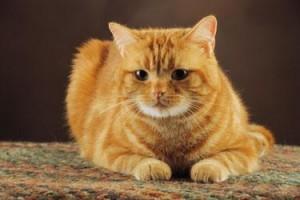 le bon choix des croquettes pour chat