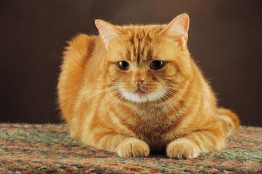 le bon choix des aliments pour chats sur laVieDesChats.com