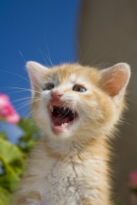 comment s'occuper d'un chaton abandonné - laVieDesChats.com
