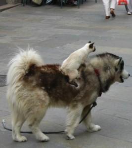 rencontre entre amoureux animaux
