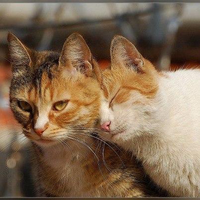 Comment deux chats ensemble peuvent vivre for Adaptation chat nouvelle maison