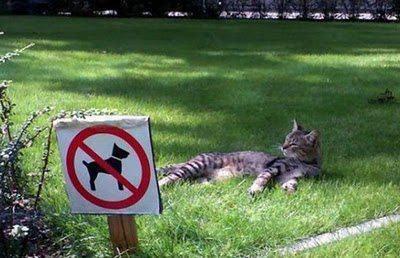 comment calmer l'agressivité d'un chat sur un chien sur laVieDesChats.com