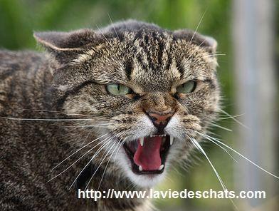 5 trucs pour s'occuper d'un chat terrorisé ou timide sur laVieDesChats.com