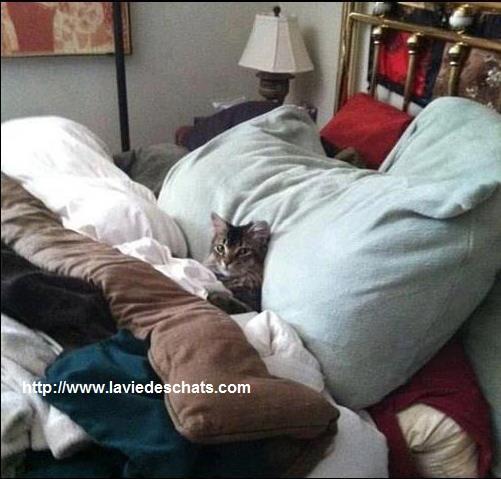 chat malade du coryza sur laviedeschats.com