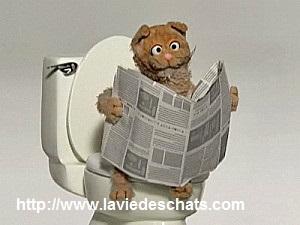 pipi de chat sur laVieDesChats.com