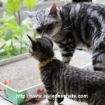 chatte montre la litiere a son chaton sur laVieDesChats.com