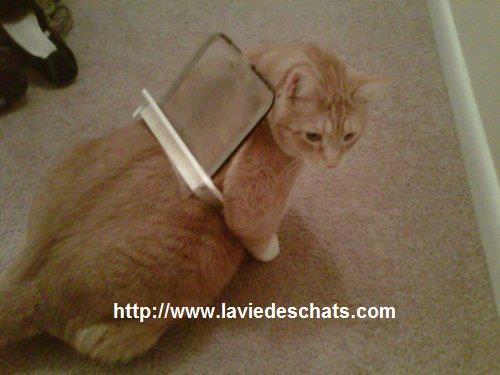 chat coince dans la chatiere sur laVieDesChats.com