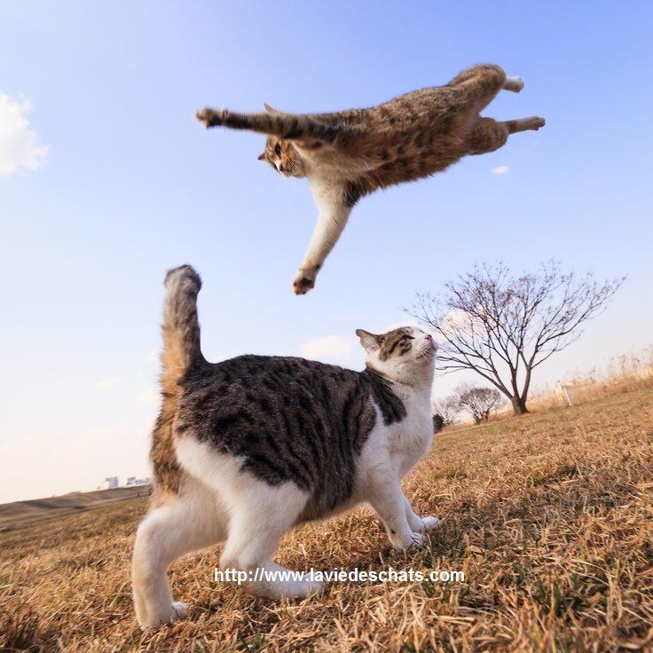 un chat en pleine santé sur http://www.laviedeschats.com