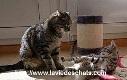chats qui se découvrent