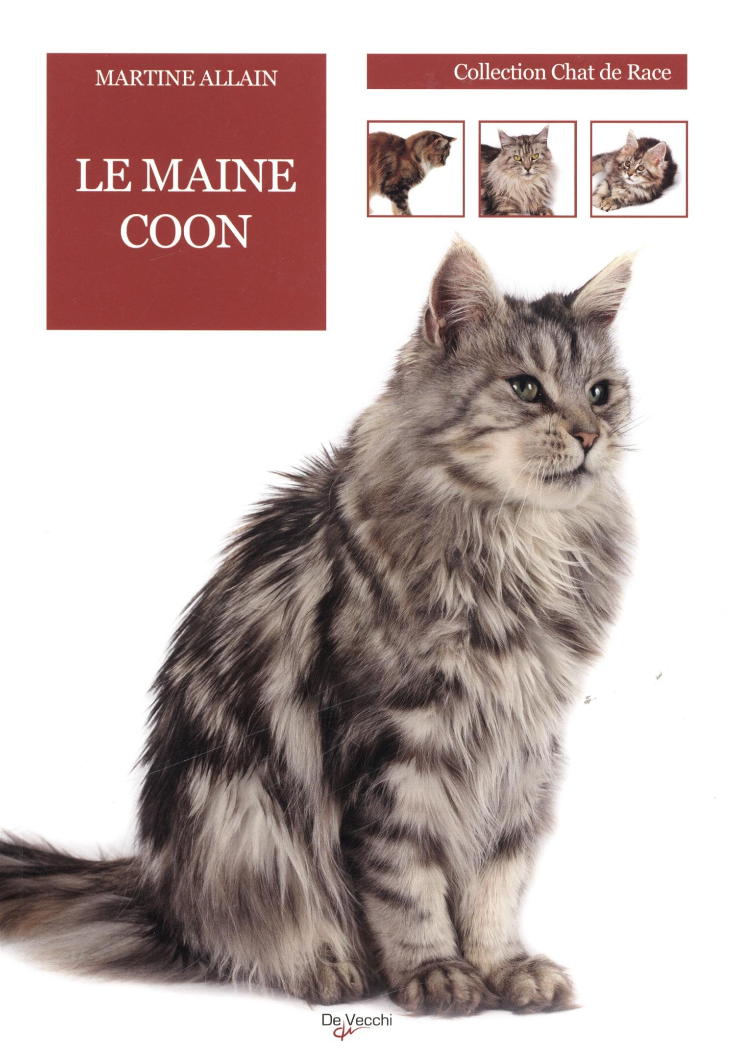 chat maine coon duree de vie popular breeds of cats. Black Bedroom Furniture Sets. Home Design Ideas