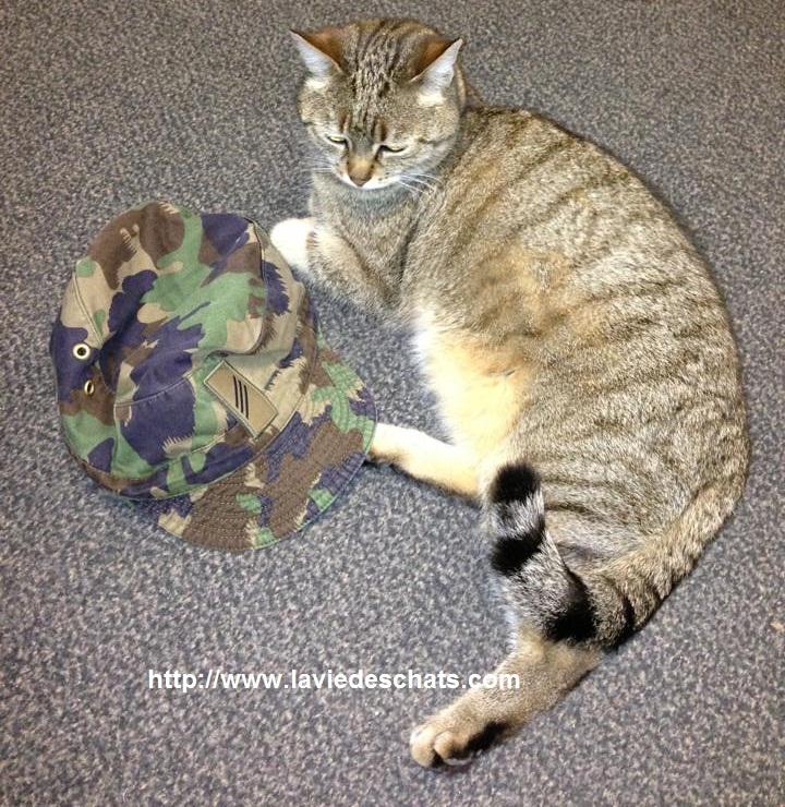 chat militaire suisse brocoli sur laVieDesChats.com