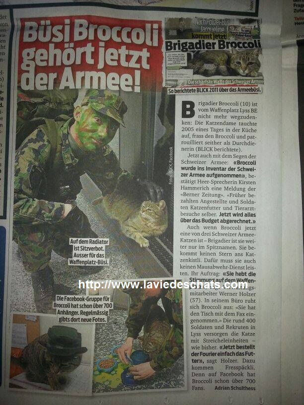 chat militaire suisse broccoli dans le journal sur laVieDesChats.com