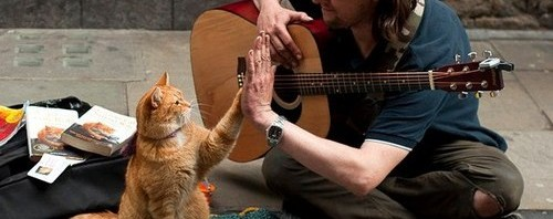 James Bowen et son chat Bob sur laVieDesChats.com
