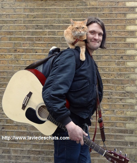 James et Bob the cat sur laVieDesChats.com 2