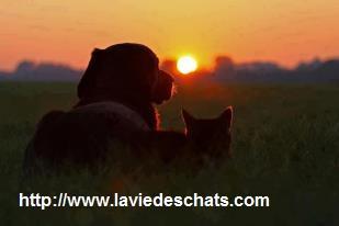 un chien bien éduqué avec un chat sur laVieDesChats.com