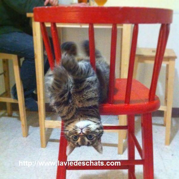 chat joue sur une chaise sur laVieDesChats.com