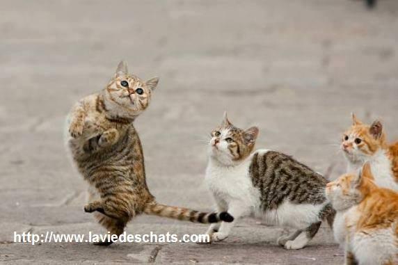 chats qui jouent et dansent sur laVieDesChats.com