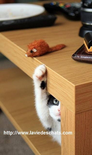 chat essaie d'attraper une fausse souris sur laVieDesChats.com