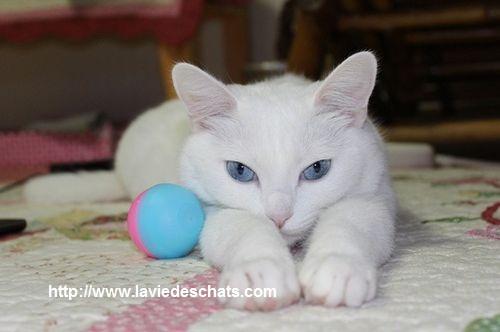comment jouer au mieux avec son chat, laVieDesChats.com vous guide