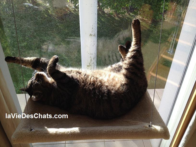 hamac pour chats approuvé sur laVieDesChats.com