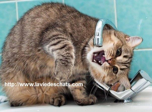 chat beau sous le robinet sur laVieDesChats.com