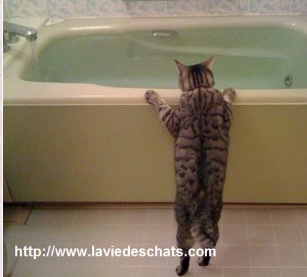 faire boire de l'eau à mon chat dans une baignoire sur laVieDesChats.com