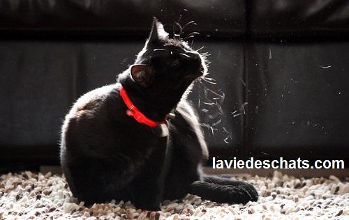 chat se gratte sur laVieDesChats.com