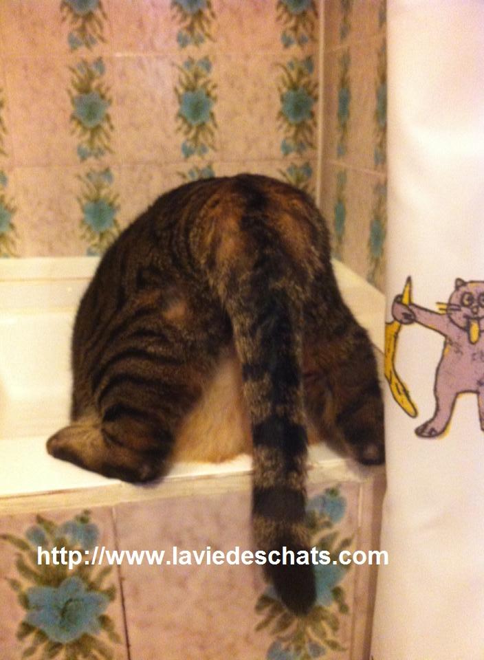 faire boire de l'eau à mon chat sur laVieDesChats.com