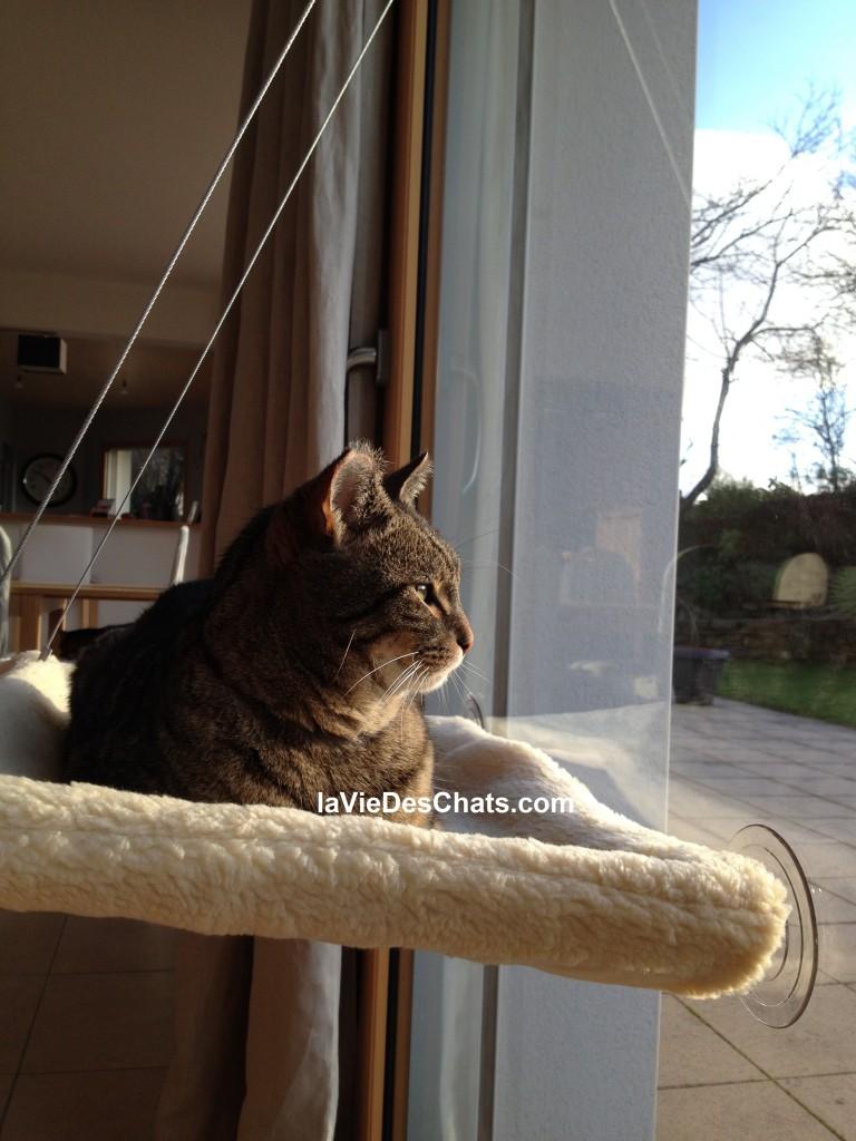 le hamac pour chat est idéal pour offrir de la liberté à votre chat d'appartement
