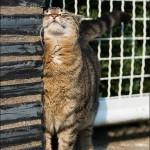 chat se frotte aux murs sur laVieDesChats.com