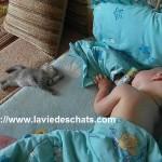 Le bel exemple d'entente entre les bébés et les chats