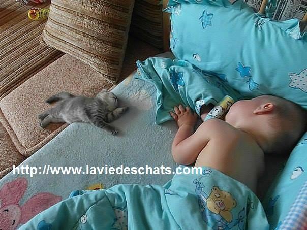 comment les bébés et les chats s'entendent sur laVieDesChats.com