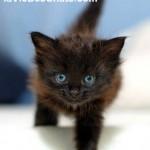 sevrage du chaton sur laVieDesChats.com
