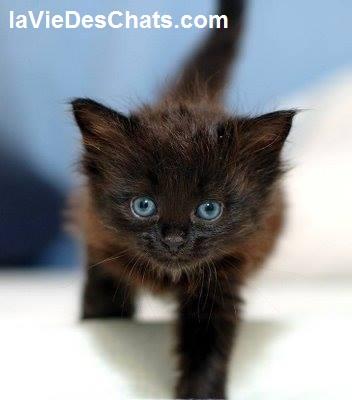 le sevrage du chaton sur laVieDesChats.com