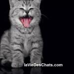 allergie aux chats sur laVieDesChats.com