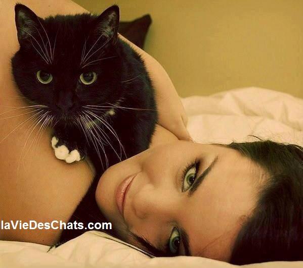 emmener son chat en voyage sur laVieDesChats.com