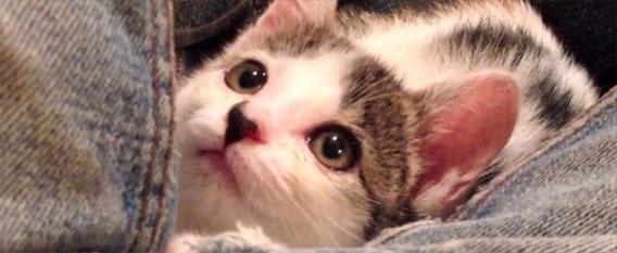 chaton sauvé par un citoyen japonais sur laVieDesChats.com