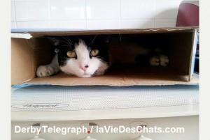 les moyens pour retrouver un chat disparu sur laVieDesChats.com