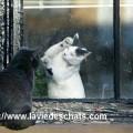 comment les chats peuvent vivre ensemble sur laVieDesChats.com
