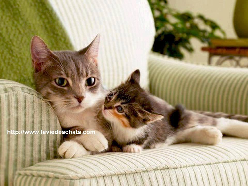 avant d'être un chaton abandonné, il était encore avec sa maman