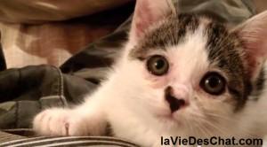 niko le chaton abandonné puis sauvé sur laVieDesChats.com