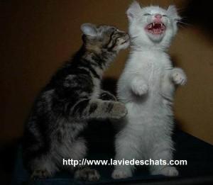 quand deux chatons se rencontrent pour la première fois