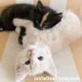 comment agir face aux bagarres de chats