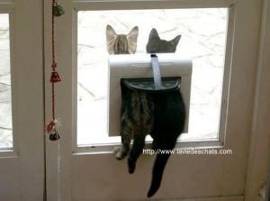 deux chatons dans la chatiere